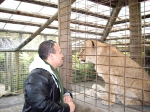 Having a conversation with a lion.